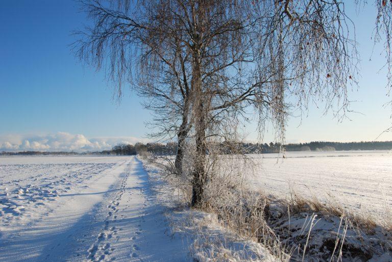 Perpetuadagen motar bort vintern